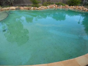 Swimming Pool Maintenance Before